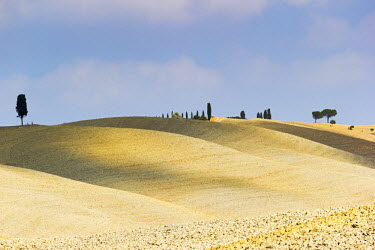ITA4838AW Tuscany, Val d'Orcia, arid landscape with cypress trees