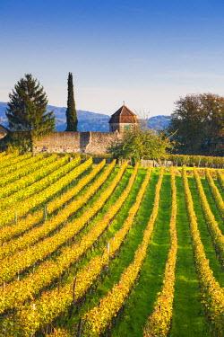 DE05614 Germany, Baden-Wurttemburg, Burkheim, Kaiserstuhl Area, vineyards elevated village view