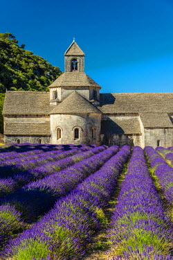 FRA8596AW Senanque Abbey or Abbaye Notre-Dame de Senanque with lavender field in bloom, Gordes, Provence, France