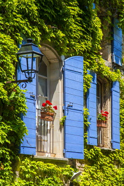 FRA8600AW Ivy surrounded house windows in Provence, France