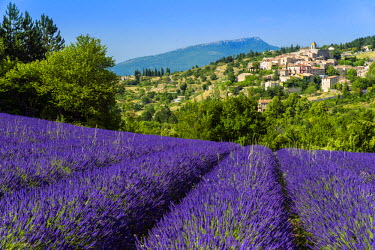 FRA8629AW View of village of Aurel with field of lavander in bloom, Provence, France