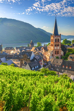 DE05774 Germany, Rhineland Palatinate, River Rhine, Bacharach, Church of Saint Peter (Sankt Peter or Peterskirche), vineyard