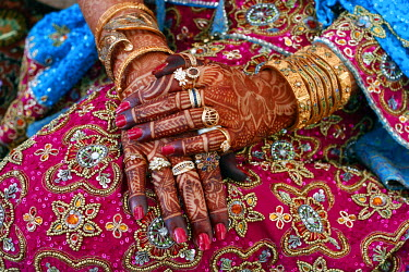 HMS0167600 India, Jammu and Kashmir, Srinagar, Marriage of a Cashmere Trader's Daughter, the Bride's Henna Painted Hands
