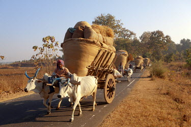 HMS0799361 India, State of Madhya Pradesh, Jabalpur, Hay transport