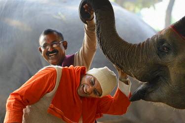 HMS1992566 India, Bihar, Patna region, Sonepur livestock fair, The elephant bazar, Swami Dwarakeshananda and owner Mahinder Pradhan getting a blessing from elephant calf Rani