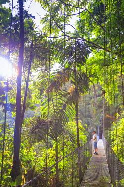 CS02206 Costa Rica, Central Highlands, Arenal National Park, Hanging Bridges inside Rainforest (MR)