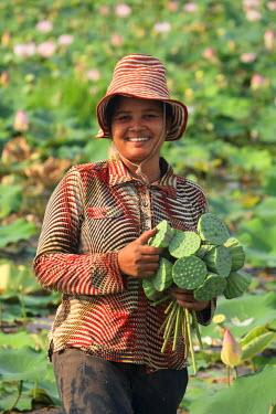 CM02096 Cambodia, Siem Reap, Lotus Flower field (Nelumbo Nucifera)