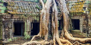 CM02065 Cambodia, Temples of Angkor (UNESCO site), Ta Prohm