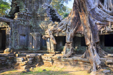 CM02090 Cambodia, Temples of Angkor (UNESCO site), Preah Khan Temple