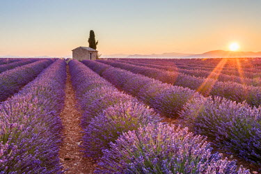 FRA8688AW Provence, Valensole Plateau, France, Europe. Lonely farmhouse and cypress tree in a Lavender field in bloom, sunrise with sunburst.