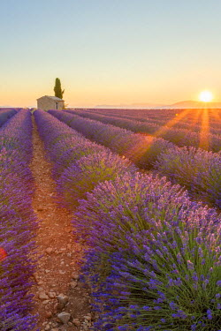 FRA8689AW Provence, Valensole Plateau, France, Europe. Lonely farmhouse and cypress tree in a Lavender field in bloom, sunrise with sunburst.