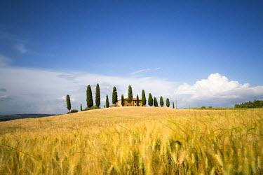 ITA4876AW Val d'Orcia, Tuscany, Italy. A lonely farmhouse with cypress trees standing in line in foreground. Yellow meadow in summer