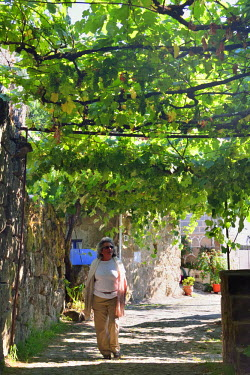 POR8363AW The pleasant shadowy streets of Lindoso, covered by grapevines (latadas). Peneda Geres National Park, Portugal (MR)