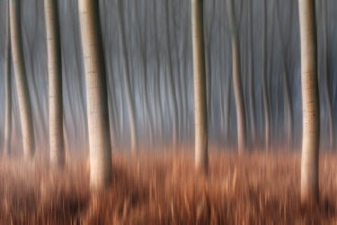 CLKDA17000 Plain Piedmont, Piedmont, Italy. Autumn abstract poplars