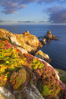 CLKGB7490 Pointe du Van, Brittany, France. Heather flowering illuminated by first sun rays