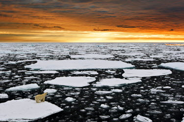 CLKMG14729 A polar bear rests in the drifting ice floating on the Arctic Ocean, Svalbard, Norway.