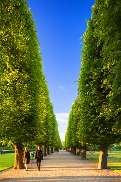 DEN0170AW Denmark, Hovedstaden, Copenhagen. A tree-lined avenue in Kongens Have (The King's Garden) in the grounds of Rosenborg Castle, the oldest and most visited park in central Copenhagen.