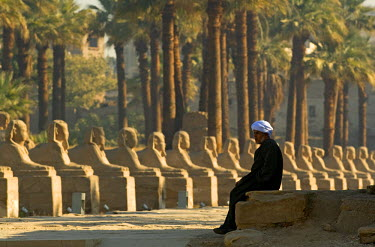 HMS0238870 Egypt, Upper Egypt, Nile Valley, Luxor Temple listed as World Heritage by UNESCO, sphinx alley