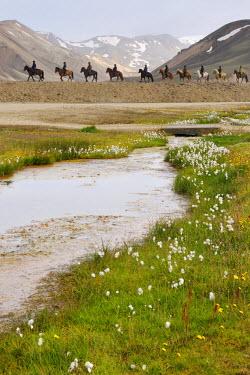 NIS1261 People riding horseback on Icelandic Horse (Equus caballus) in vulcanic landscape., Iceland, Landmannalaugar
