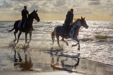 NIS73837 Two horse (Equus ferus caballus) riders on the beach, The Netherlands, Noord-Holland, Callantsoog