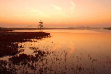 NIS81928 Saltmarsh at Moriaanshoofd at sunset, The Netherlands, Zeeland, Schouwen-Duiveland