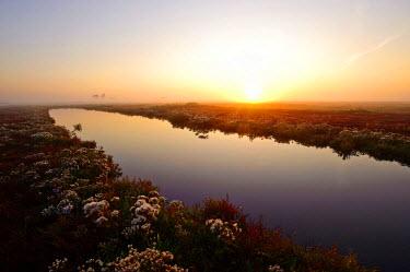 NIS81934 Saltmarsh in inlet of Zuidkust Schouwen nature reserve at sunset, The Netherlands, Zeeland, Schouwen-Duiveland