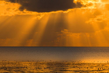 NIS97750 Sunset with clouds and sunrays at the Waddensea at low tide, The Netherlands, Friesland, Koehool
