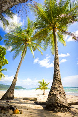 CR33144AW Costa Rica, Santa Teresa, Mal Pais,.Playa Carmen in a sunny day with ocean sea and palms