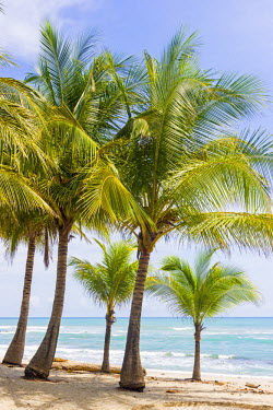 CR33150AW Costa Rica, Santa Teresa, Mal Pais,.Playa Carmen in a sunny day with ocean sea and palms