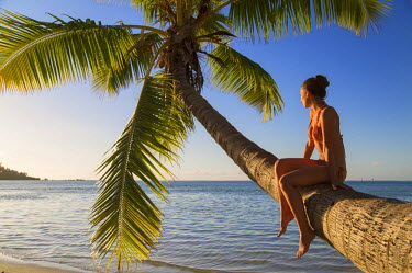 FPO0218AW Woman sitting on palm tree at Hauru Point, Mo'orea, Society Islands, French Polynesia (MR)