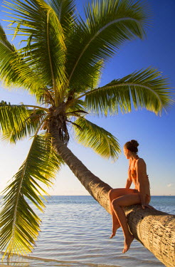 FPO0219AW Woman sitting on palm tree at Hauru Point, Mo'orea, Society Islands, French Polynesia (MR)