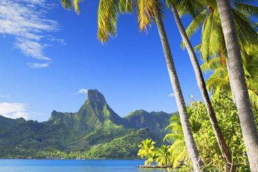 FPO0226AW Cook's Bay, Mo'orea, Society Islands, French Polynesia
