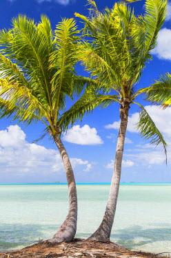 FPO0436AW Palm trees at Blue Lagoon, Fakarava, Tuamotu Islands, French Polynesia