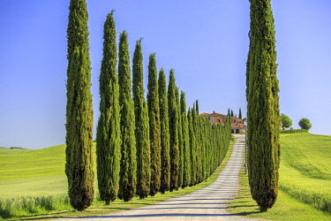CLKFV25827 Road with cypresses and farmhouse. Orcia Valley, Siena district, Tuscany, Italy.