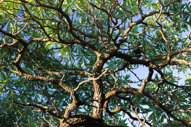 AUS2131 Australia, Queensland, Heron Island