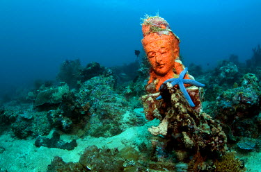 NIS224712 Statue with coral growth on it, Indonesia, Bali, Pemuteran, Temple wall