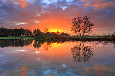 NIS226124 Landscape with unidentified trees reflecting in flooded grassland at sunrise, The Netherlands, Overijssel, Ravenswaarden