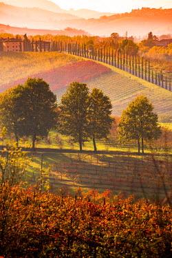 ITA5068AW Castelvetro, Modena, Emilia Romagna, Italy. Sunset over the Lambrusco Grasparossa vineyards and rolling hills in autumn