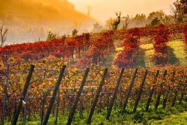 ITA5070AW Castelvetro, Modena, Emilia Romagna, Italy. Sunset over the Lambrusco Grasparossa vineyards and rolling hills in autumn