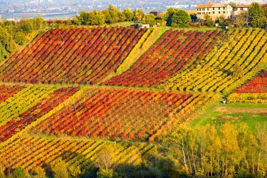 ITA5071AW Castelvetro, Modena, Emilia Romagna, Italy. Sunset over the Lambrusco Grasparossa vineyards and rolling hills in autumn