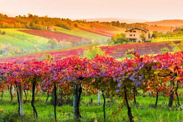 ITA5081AW Castelvetro, Modena, Emilia Romagna, Italy. Sunset over the Lambrusco Grasparossa vineyards and rolling hills in autumn