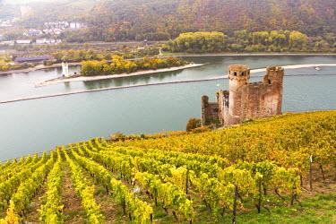 GER8911AW Burg Ehrenfels, Rudesheim, Rhine valley, Hesse, Germany