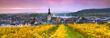 GER8913AW Sunrise over the vineyards of Rudesheim, Rhine valley, Hesse, Germany