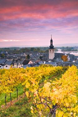 GER8914AW Sunrise over the vineyards of Rudesheim, Rhine valley, Hesse, Germany