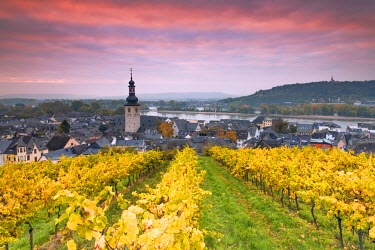 GER8915AW Sunrise over the vineyards of Rudesheim, Rhine valley, Hesse, Germany