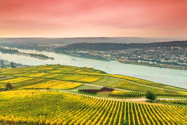 GER8933AW Sunrise over vineyards, Rudesheim, Rhine valley, Hesse, Germany