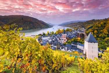 GER8936AW Sunrise over vineyards, Bacharach, Rhineland-Palatinate, Germany
