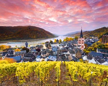 GER8938AW Sunrise over vineyards, Bacharach, Rhineland-Palatinate, Germany