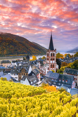 GER8940AW Sunrise over vineyards, Bacharach, Rhineland-Palatinate, Germany