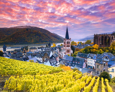GER8941AW Sunrise over vineyards, Bacharach, Rhineland-Palatinate, Germany